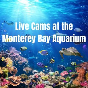 homeschooling with live cams at the aquarium
