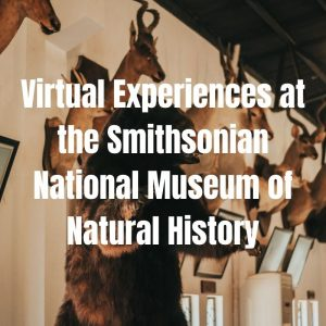 virtual field trip at the national museum